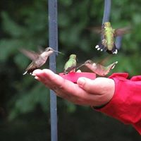 Hummingbird Feeders